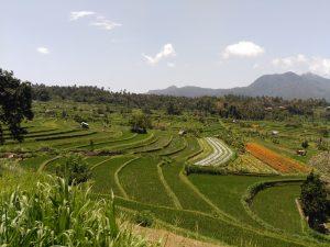Origen De La Agricultura Agricultor Genuino