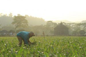 Agricultor genuino trabajando en labores agrícolas