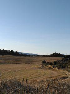 campo agricultura intensiva llevada a cabo por agricultor genuino