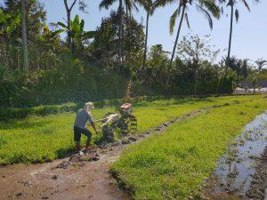 Preparación de la tierra por campesino. Agricultura poco mecanizada